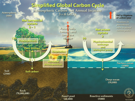 Global Lifecycle of Carbon Emissions